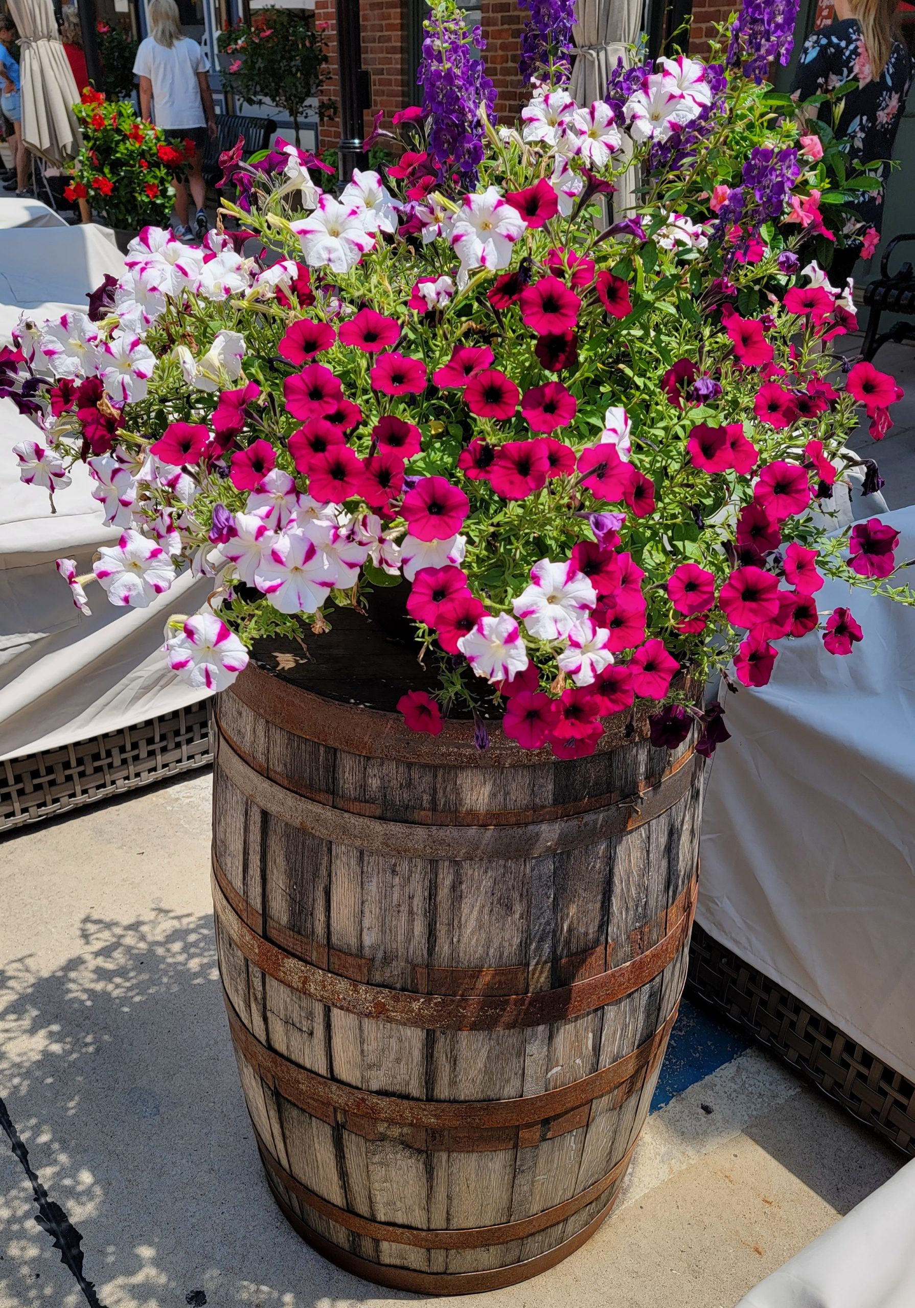 Whiskey Barrel with Flowers. 7.2021